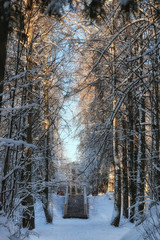 winter forest landscape sunlight snow