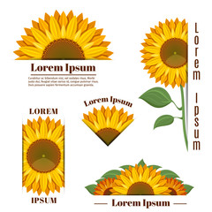 Wall Mural - Sunflower banners and vector yellow sun flower labels with text