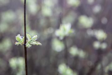 Wild little flowers full of dew in the dense fog