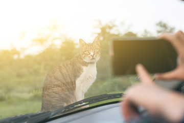 cat on car hood