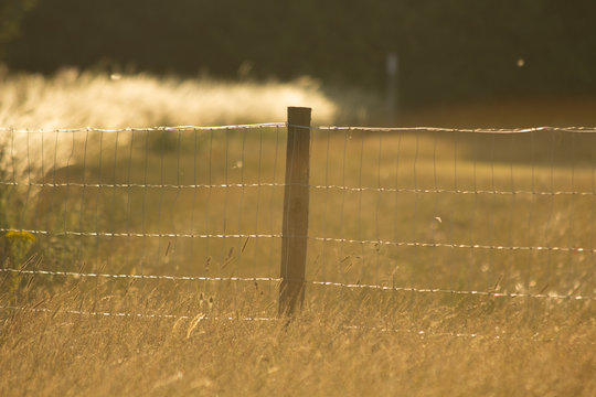 sheep wire fence