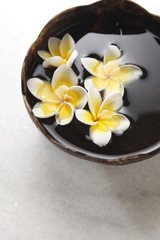 yellow white frangipani