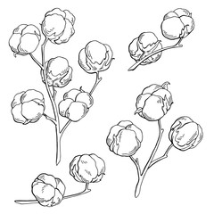 Cotton plant graphic black white isolated sketch illustration vector
