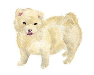 Isolated watercolor dog standing on white background. Cute puppy.