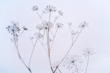 Winter background with dry grass