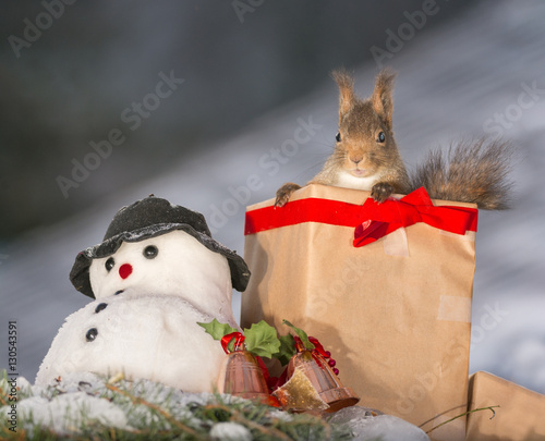 Christmas Squirrel.Christmas Squirrel Present Stock Photo And Royalty Free