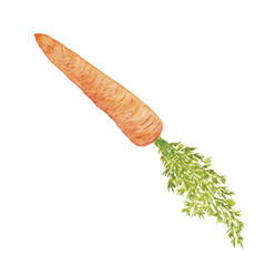 Watercolor Vegetable Carrot Hand-Painted Isolated