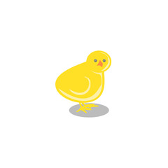Yellow little chick