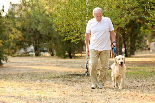 Senior man and big dog walking in park