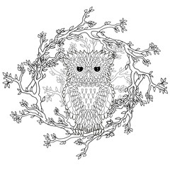 Coloring page with the owl