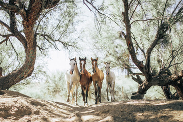 Horses running in forest on sunny day