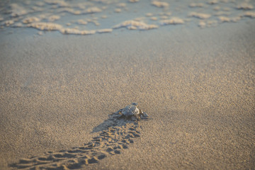 Turtle moving on beach