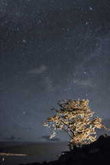 Tree growing on hill by river against starry sky