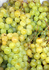 bunch of white grapes just harvested