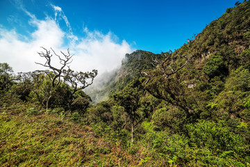 Sri Lanka: Horton Plains National Park, formation of clouds