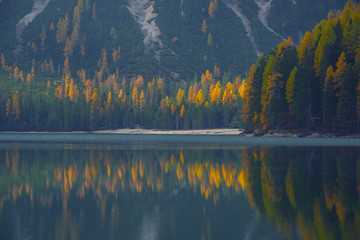 Scenic view of golden larches reflected in water, Lake Braies