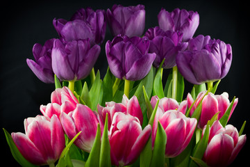White Tipped Red and Purple Tiered Tulips