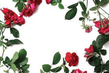 Frame of red beautiful roses with green leaves isolated on white background. Place for design and text. Copyspace, flat lay, top view.