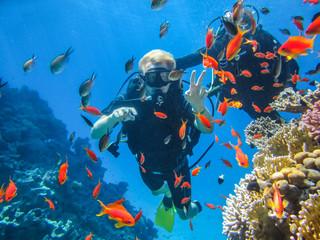 Photo Blinds Diving Красивый коралловый риф в Красном море. Дайвинг в Египте