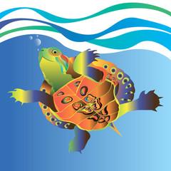vector animal turtle illustration reptile cartoon nature