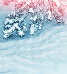 Christmas background with snow-covered fir branches