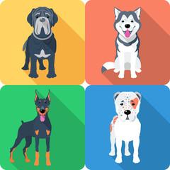 Vector set of dogs Central Asian Shepherd, Doberman, Alaskan Malamute and Mastino breed icon flat design