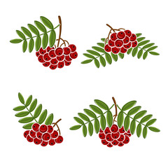 Berries rowan set. Vector