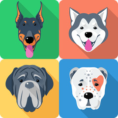 Vector set of dogs Central Asian Shepherd, Doberman, Alaskan Malamute and Mastino breed icon flat head design
