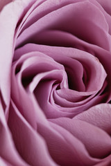 Wedding Bouquet, Pink Peony, Orchid and David Austin Rose