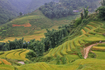 rice terraces and hut on the hill Sapa Vietnam
