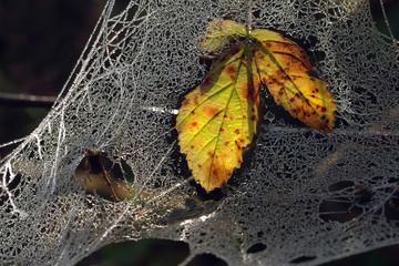 Zmrożona sieć pajęcza - fototapety na wymiar