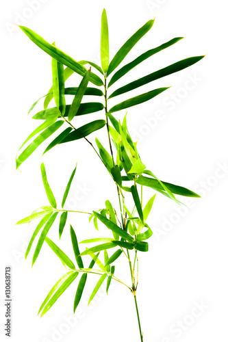 tige de bambou sur fond blanc stockfotos und lizenzfreie bilder auf bild 130638713. Black Bedroom Furniture Sets. Home Design Ideas
