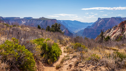 The narrow path among the dry grass toward the canyon. Scenic view of the canyon. Zion National Park, Utah, USA