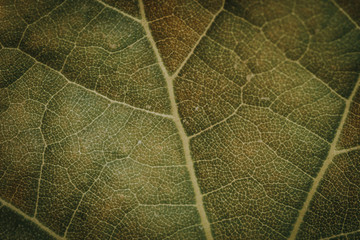 Macro of a dark green leaf