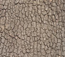 bark tree texture