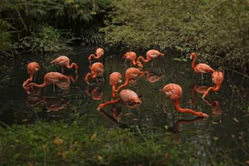 fenicotteri rosa che bevono nello stagno