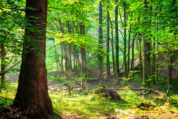 Wild forest landscape in the summer