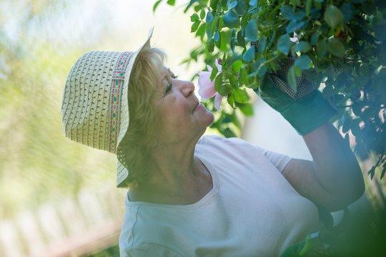 Senior woman smelling flower in garden