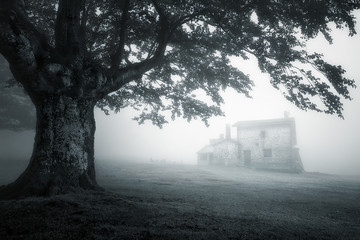 Wall Mural - mysterious house in foggy forest
