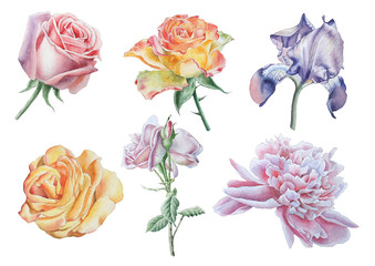 Set with flowers. Rose. Peony. Iris. Watercolor illustration.