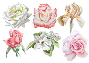 Set with flowers. Rose. Iris. Blossom. Watercolor illustration.