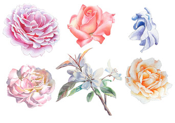 Set with flowers. Rose. Blossom. Watercolor illustration.