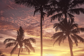 Silhouette of palm trees at sunset. Matte vintage photo processing.
