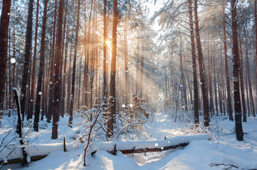 Fantastic landscape glowing by sunlight. Natural park. Carpathian, Ukraine, Europe. Beauty world. Happy New Year!!