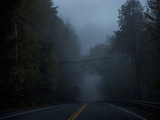 View of empty road in forest during foggy weather