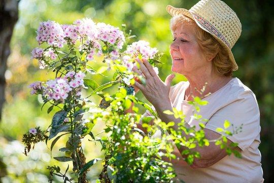 Senior woman examining flowers in garden