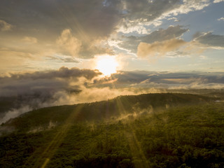Tree canopy with mist rising above, sun breaking through clouds Fototapete