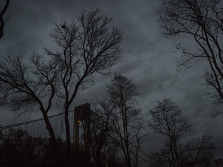 Trees and bridge in silhouette, at night