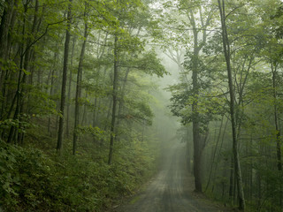 Road through treelined forest