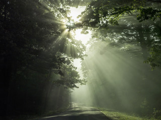 Road view of sunrays  coming through overhead branches